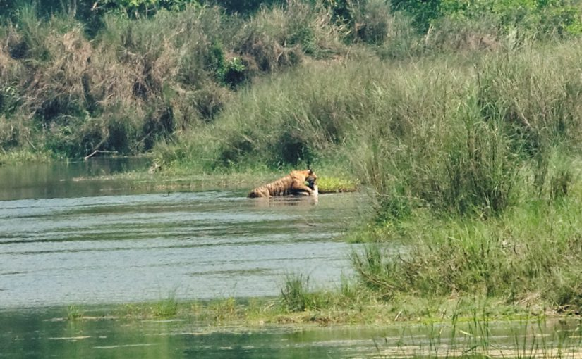 "Nepal ""Bardia National Park: Finding Tigers on foot"""